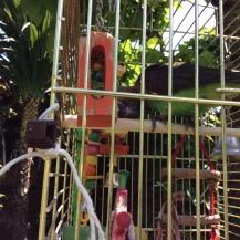 hetty garden 2