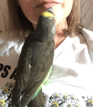 mom kisses