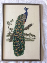peacock framed