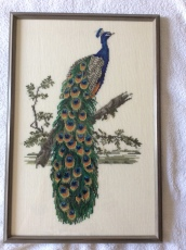 peacock framed