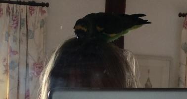doing-mums-hair-1.jpg