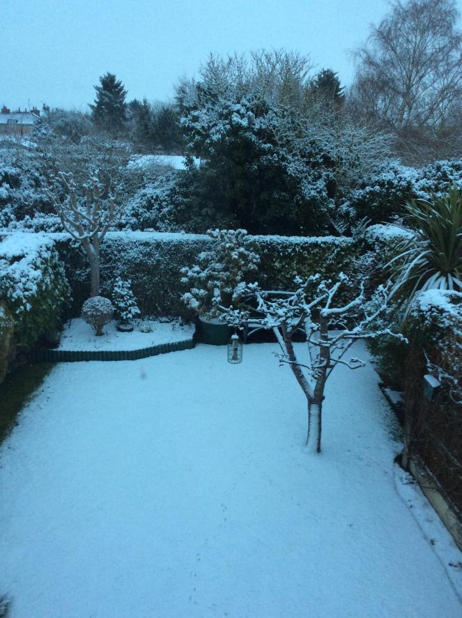 Feb 1st Snow 1