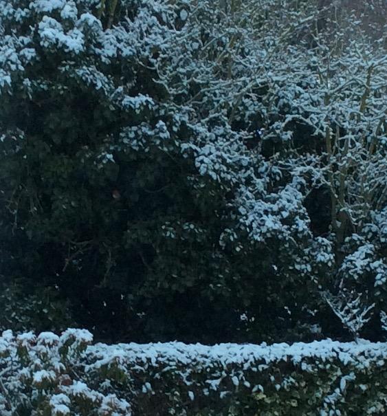Feb 1st Snow Robin