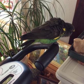 new perch