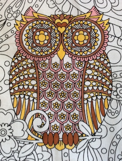 owls brown eyed