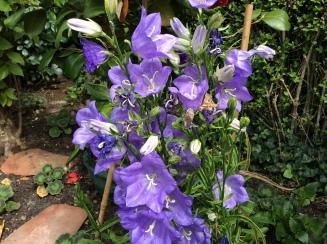 bright flowers 2