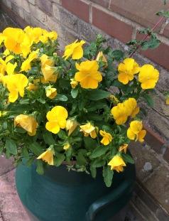 bright flowers 4