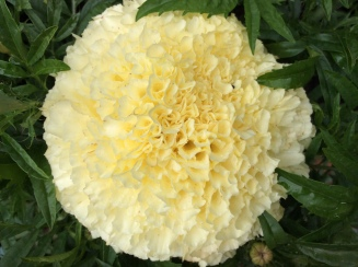 single flowers 2