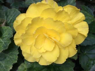 single flowers 3