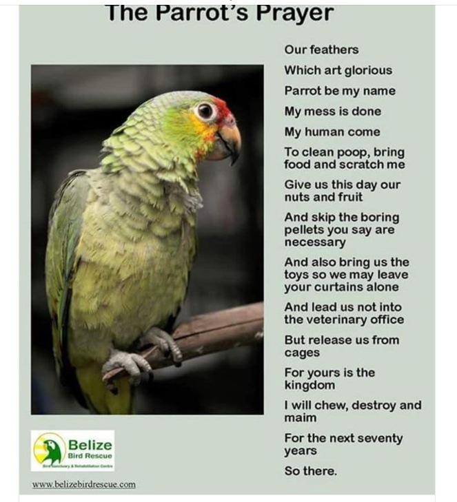 parrot prayer